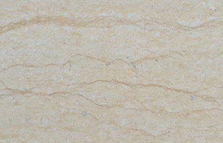 Calcar yellow-sylvia